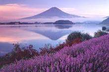 富士山や昇仙峡など、有名観光地にもホテル春日居から遊びに行けます